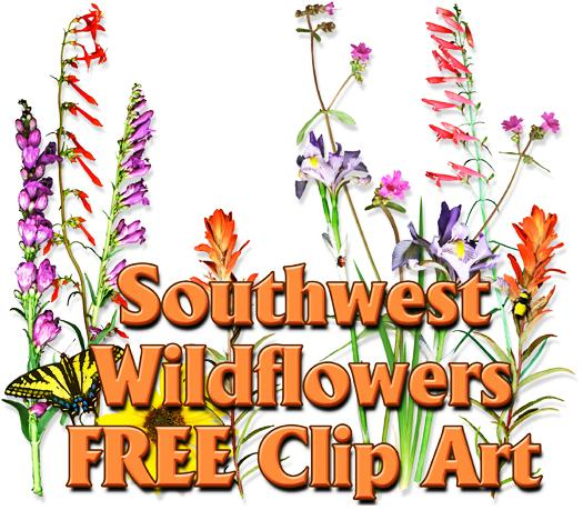 Wildflower clipart royalty free Free wildflower clipart clipart wildflower