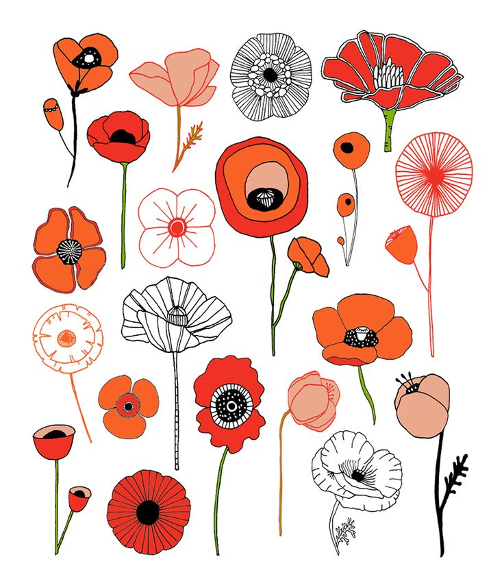 Wildflower clipart simple flower Illustration Poppies Art ideas on