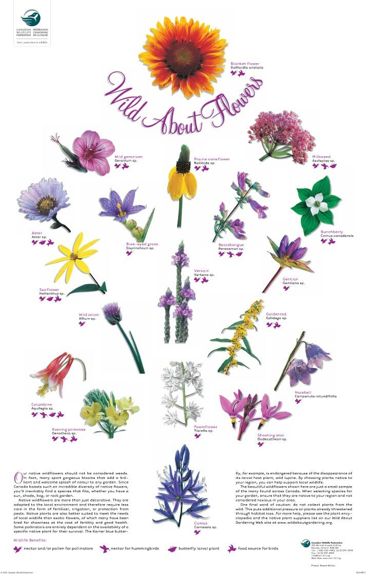 Wildflower clipart small plant Beauty a visual Wildlife Garden
