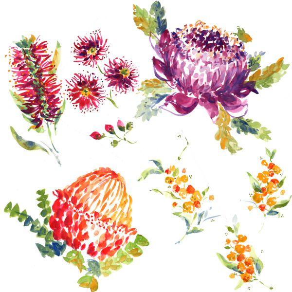 Wildflower clipart southwest Australian on more Pinterest 645