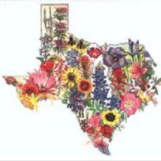Wildflower clipart texas Texas Pinterest best one to