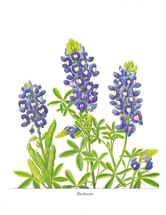 Wildflower clipart texas Texas Paintbrush Flower Indian Set