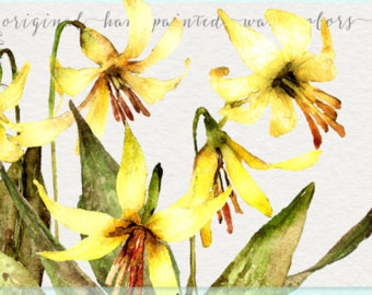 Wildflower clipart yellow flower Etsy Painting Wildflower Boho clipart