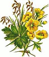 Wildflower clipart yellow flower Clip Flower on Art Wildflower