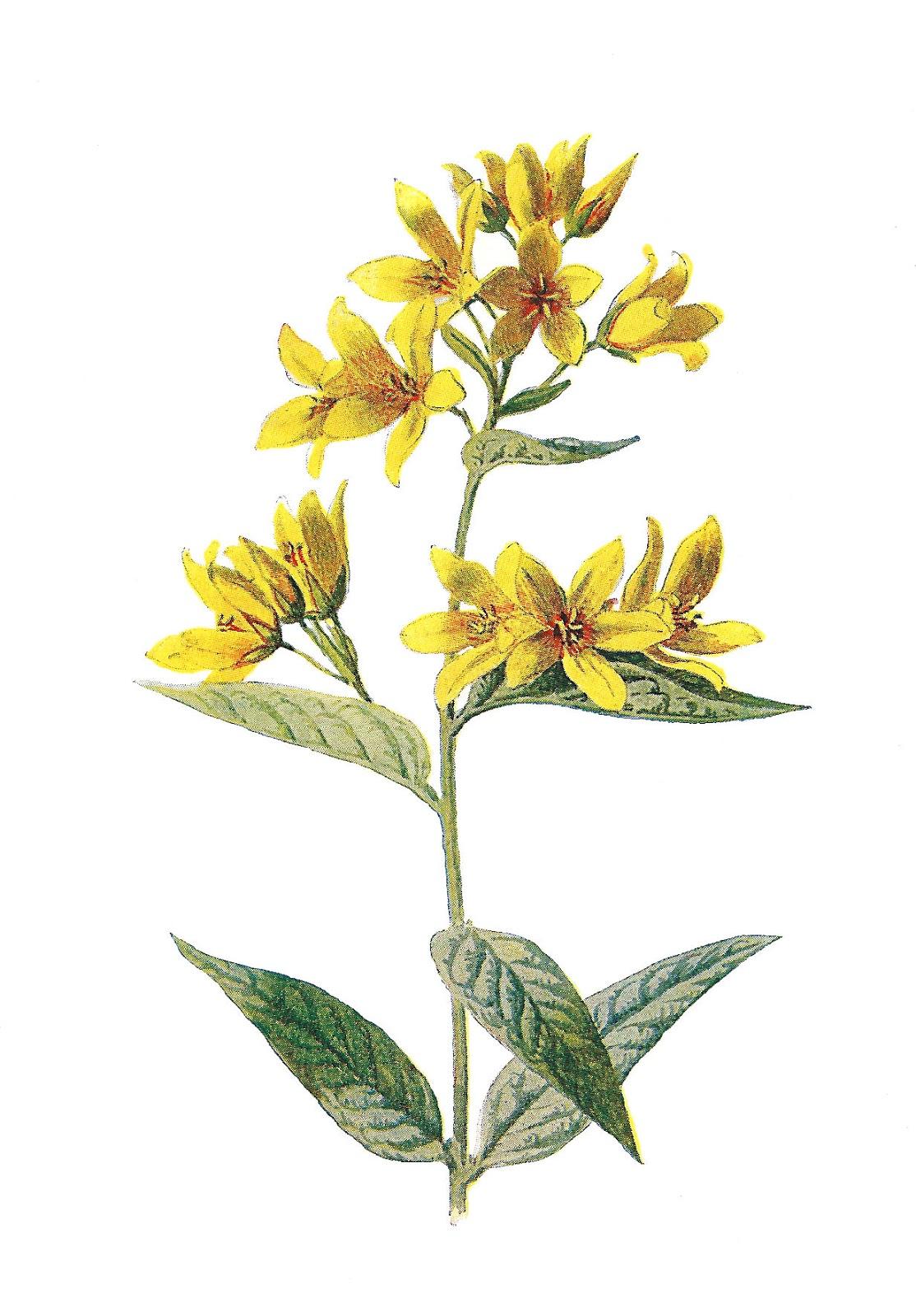 Wildflower clipart yellow flower Printable clip  Wildflower art