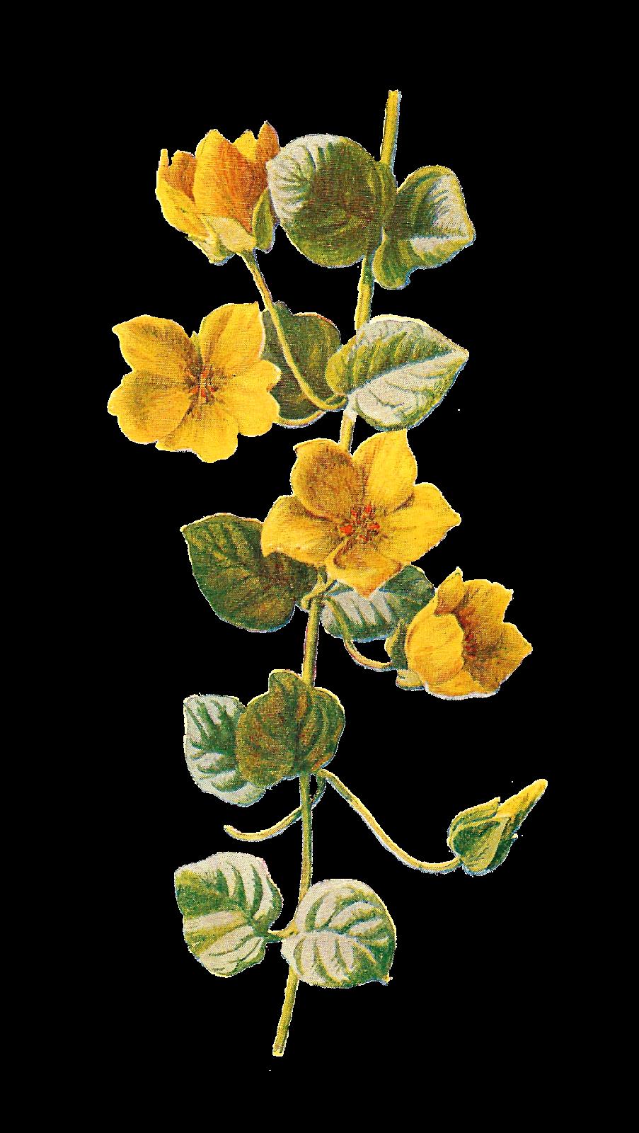 Wildflower clipart yellow flower Art wildflower  Wildflower Antique