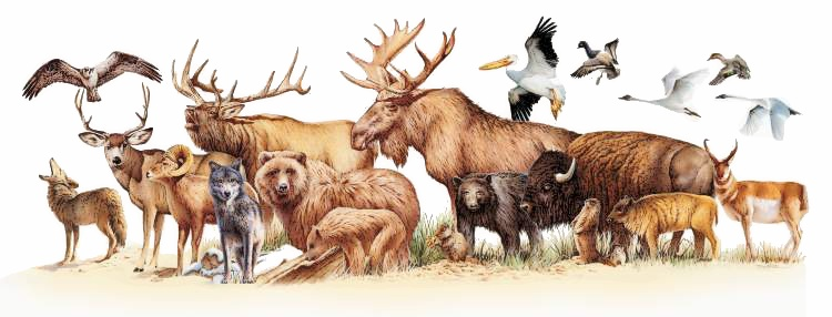 Yellowstone clipart wildlife Free Clip Art Clipart Wildlife