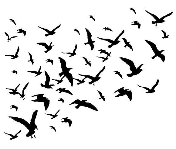 Wildlife clipart bird flock Bird and Flying flock Bird