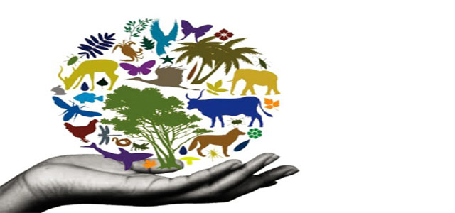 Wildlife clipart hans Biodiversity Image) and environment vital