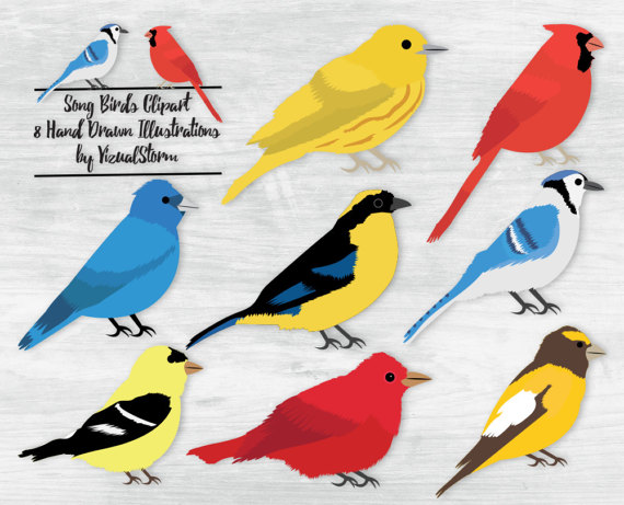 Wildlife clipart songbird Warbler Warbler Jay Cardinal Bunting