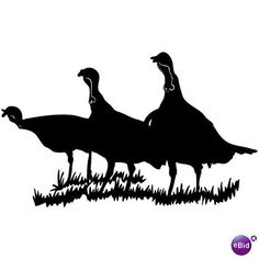 Wildlife clipart turkey hunting Hunting European arrived settlers Long