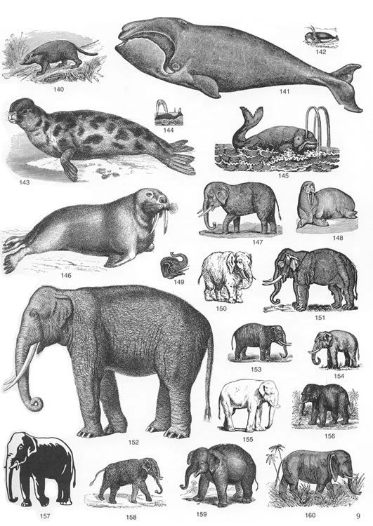 Wildlife clipart vintage animal 88 natuur and Animals Bungalow: