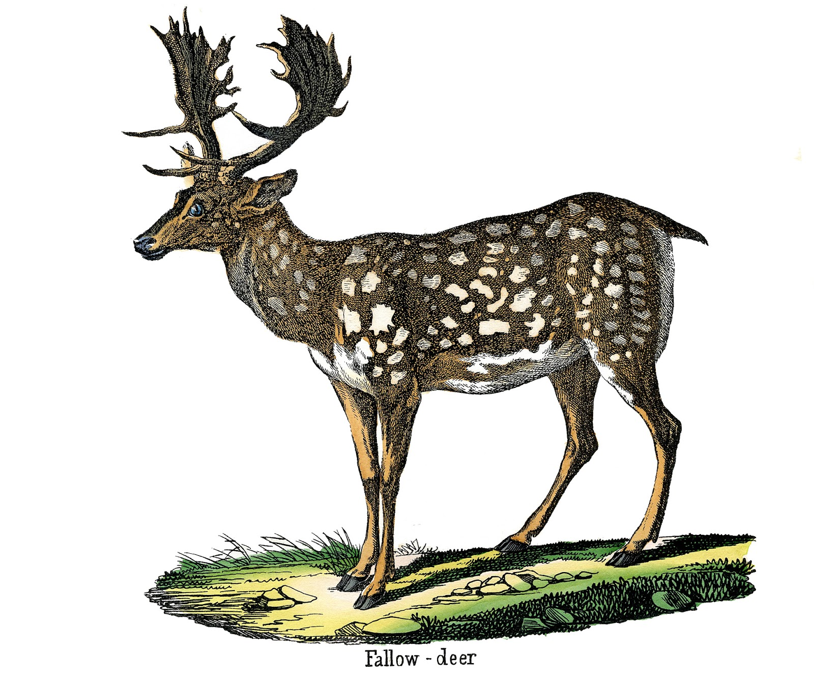 Wildlife clipart vintage animal – The Deer Animal Image