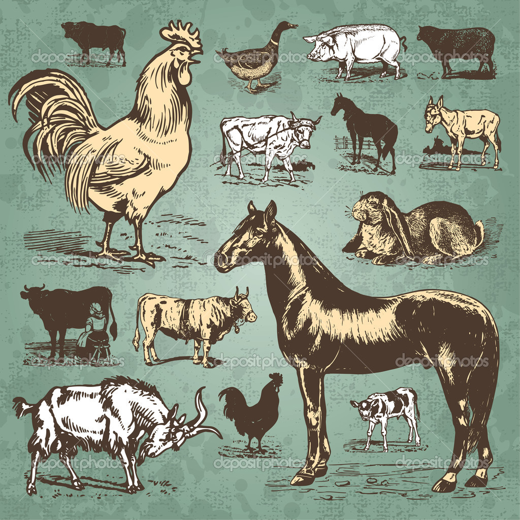 Wildlife clipart vintage animal Illustrations set Farm Animal ©