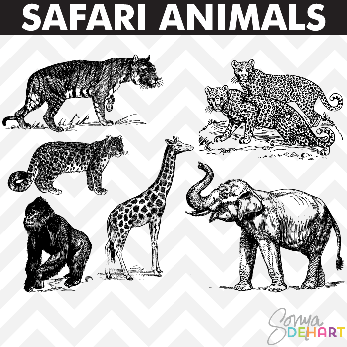 Wildlife clipart vintage animal Safari Vintage Art Art