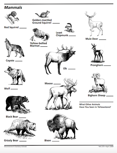 Yellowstone clipart wildlife To Yellowstone Winter Park at