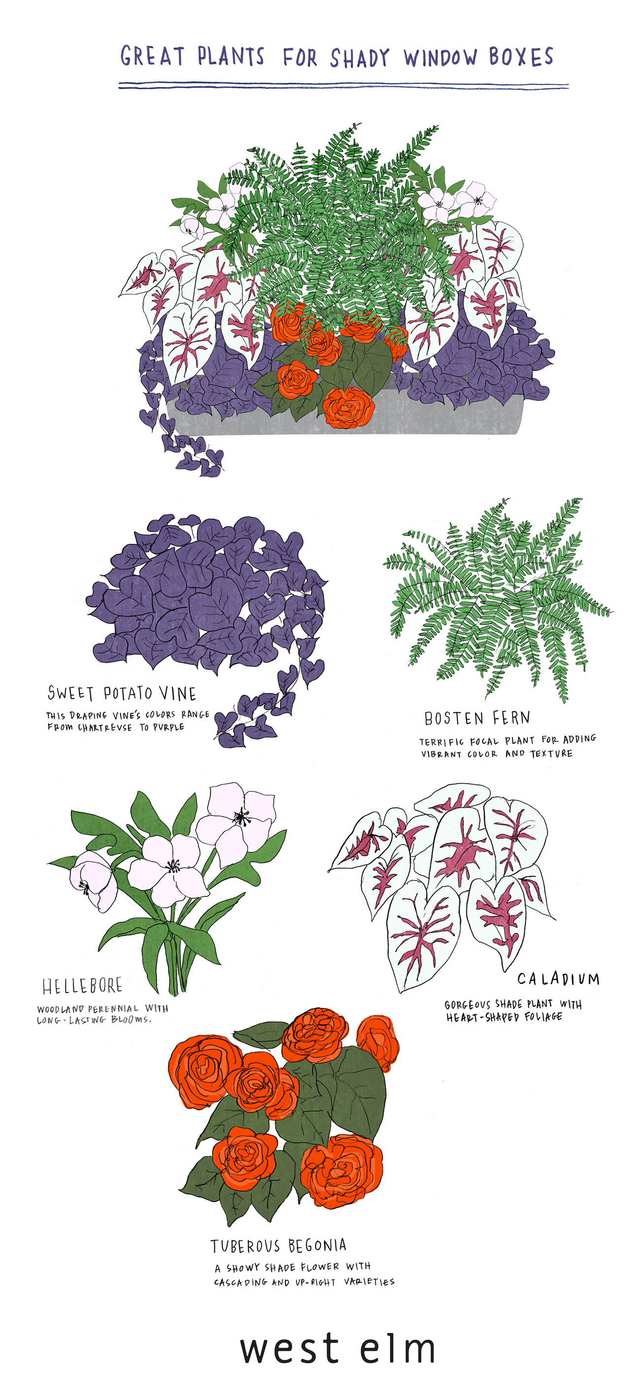 Window clipart flower bed Shade for  plants the