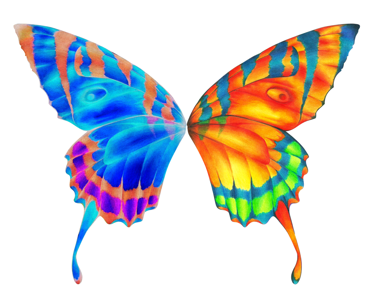 Colouful clipart butterfly wing #14