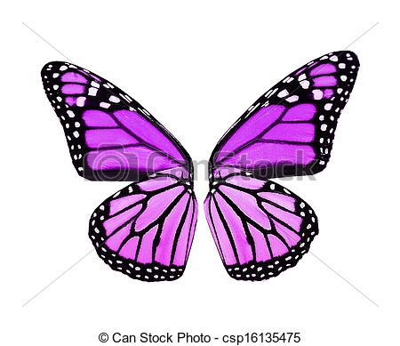 Colouful clipart butterfly wing #7