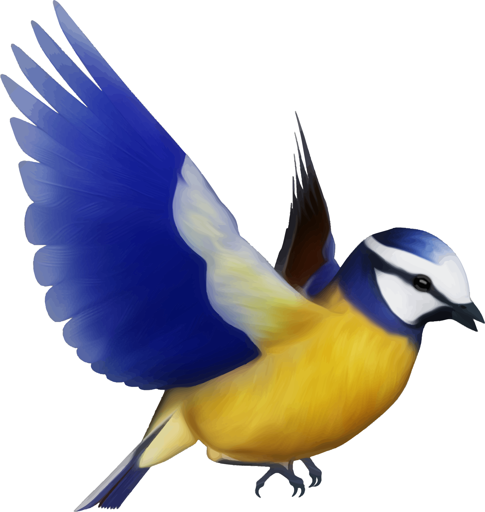 Wings clipart colorful bird Bird Colorful Clipart Bird Colorful