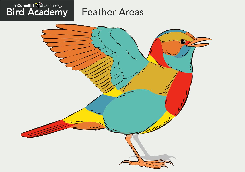 Wings clipart colorful bird Anatomy Academy Anatomy Bird •