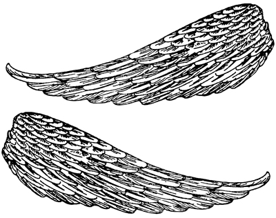 Wings clipart feather Art Clip Free Clipart Wings