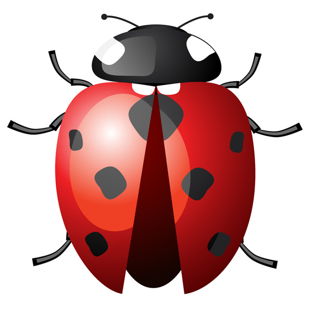 Wings clipart ladybug Spread Wings with download Ladybird