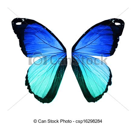 Drawn butterfly blue butterfly Blue csp16298284 blue isolated on