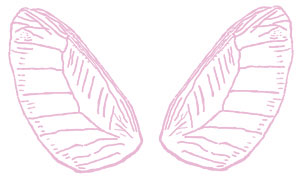 Wings clipart pink Pink Pink Clip Wings Fairy