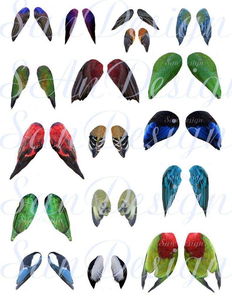 Wings clipart pretty bird Wings item? Like Sheet 2