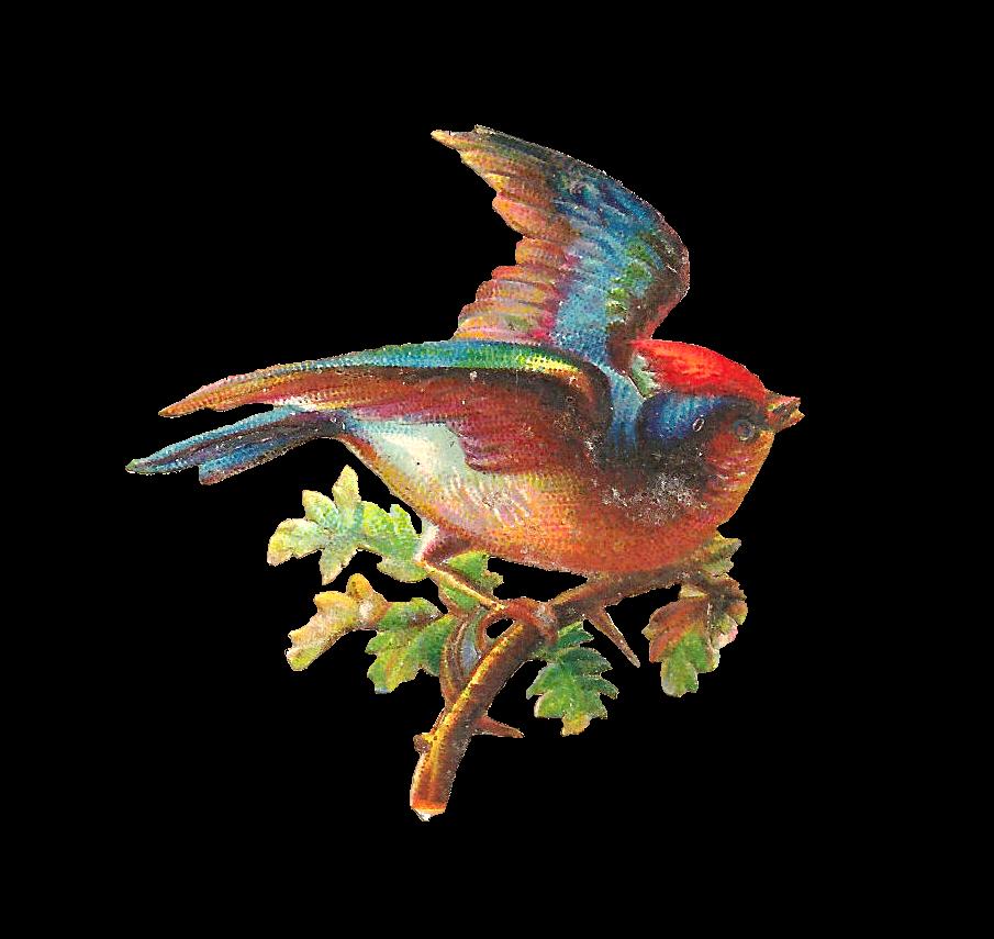 Wings clipart pretty bird Bird Beautiful Antique Digital Bird