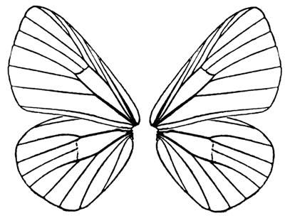 Wings clipart printable Pattern Butterfly Template printable