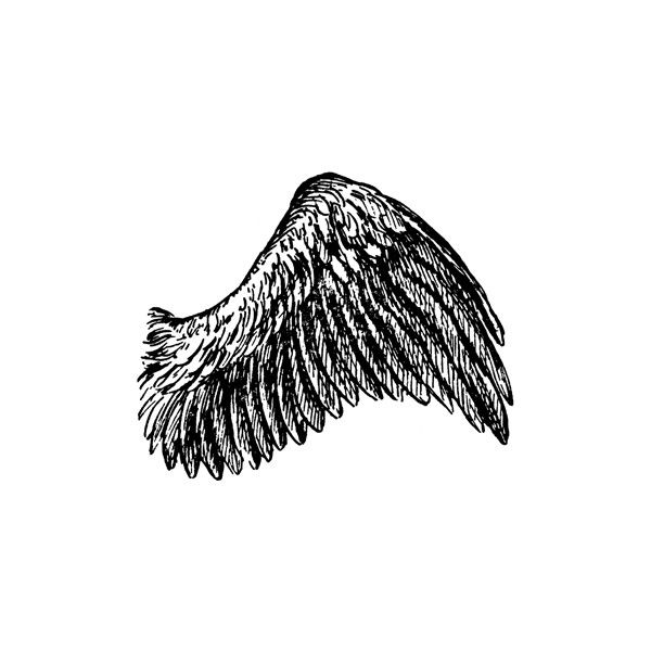 Wings clipart real bird 62 liked Clipart on images