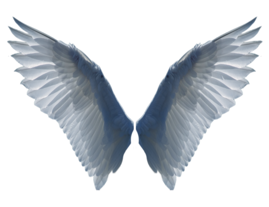 Wings clipart real bird (900×695) d5hzabr png Artsy wings_2_png_by_evelivesey