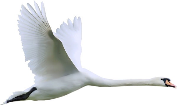Wings clipart real bird With Spread in  in