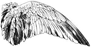 Wings clipart vintage Handbook vintage white franz of
