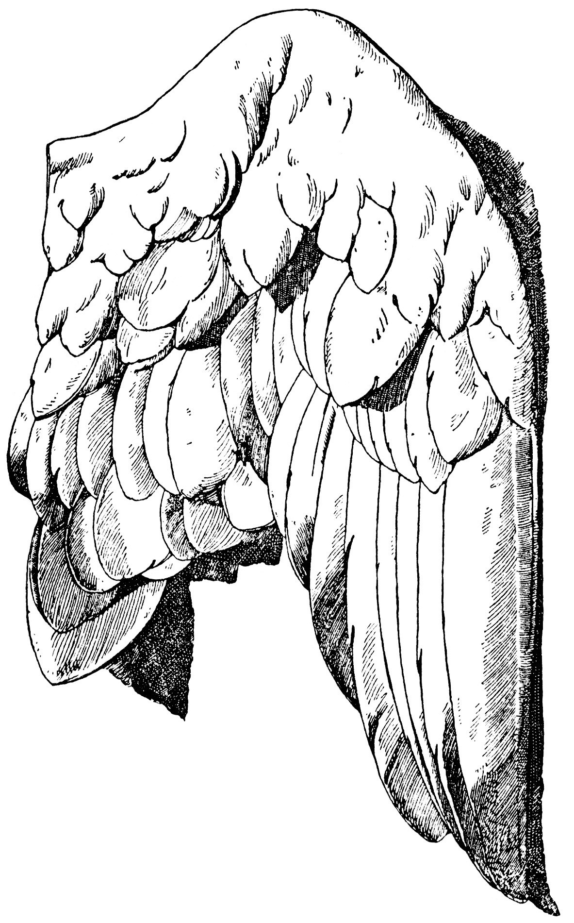 Wings clipart vintage Meyer black handbook vintage franz