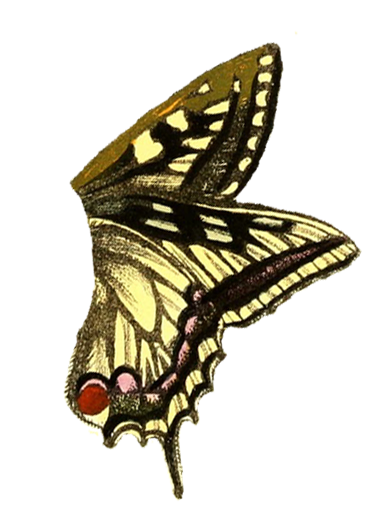Wings clipart vintage  Clipart Vintage Fairy Butterfly