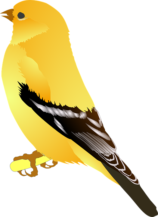 Wings clipart yellow Wings Max photo Free Brown