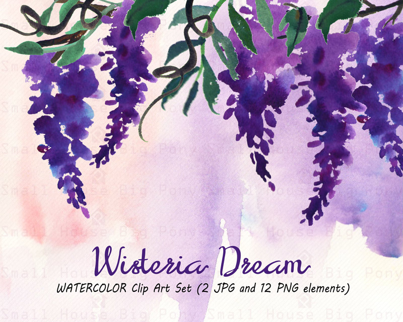 Wisteria clipart Floral PNG clipart Clipart: 12