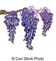 Wisteria clipart drawing Purple Purple Art