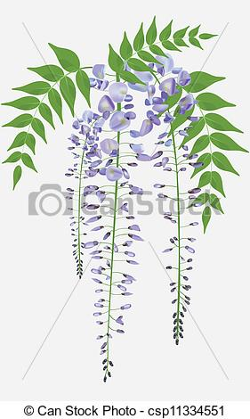 Wisteria clipart drawing Wisteria with of vector Blooming
