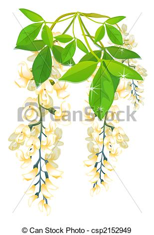 Wisteria clipart drawing Illustration Wisteria Flowers Stock Wisteria