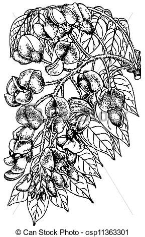 Wisteria clipart drawing For images DRAWINGS Pinterest PAINTINGS