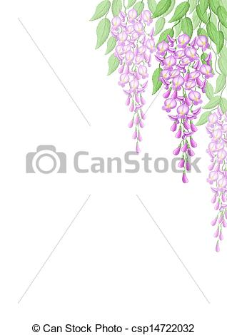 Wisteria clipart drawing Illustration  Wistaria flowers flowers