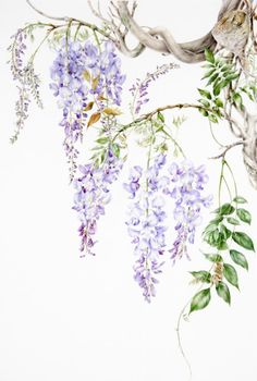 Wisteria clipart drawing Painting 2012 Art Art