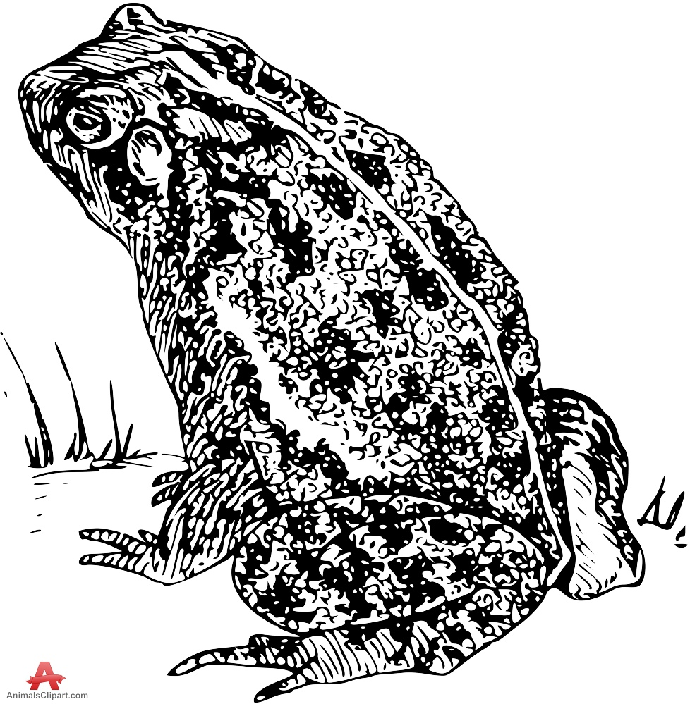 Wizard clipart toad Animals toad Clipart Toad Clipart