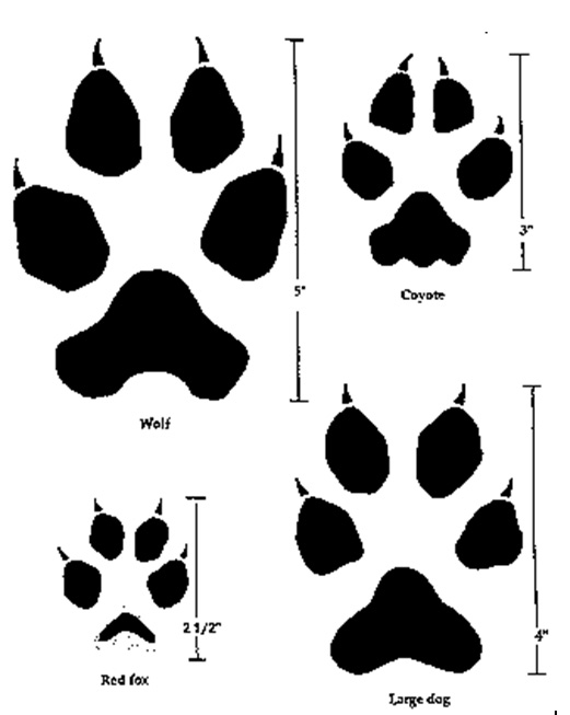 Wolf clipart dog tracks The or wolf of red