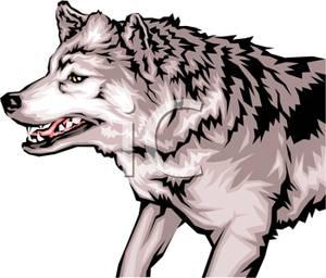 Wolf clipart snarl Snarling Clipart Snarling Clipart Wolf