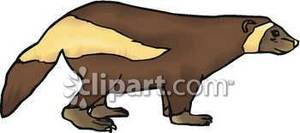 Wolverine clipart animal Free Royalty Side Free Clipart